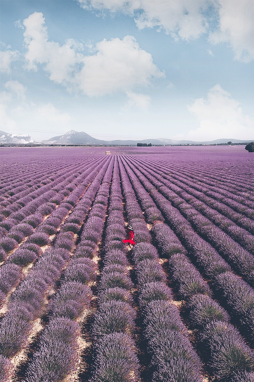 The Ultimate Guide To The Lavender Fields In Provence France